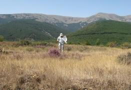 sampling for grasshoppers in Iberian mountains