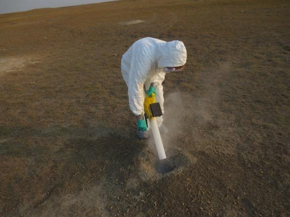 treating prairie dog burrow with Beauveria fungus