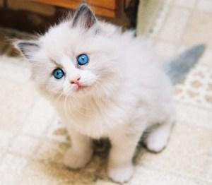 gato-adoptar