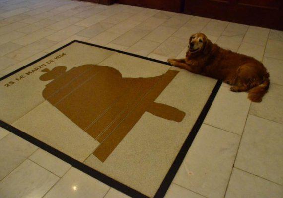 Conoce a 'Greta' la mascota del gobernador que pasea por Palacio de Gobierno