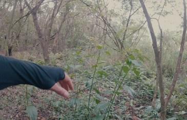 No Bosque da Loucura