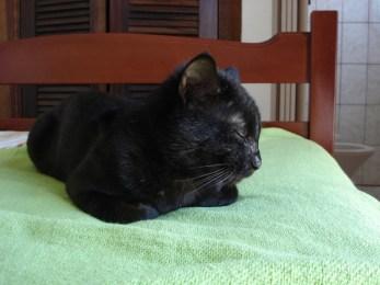 8 de agosto é o Dia Internacional do Gato