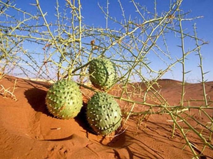 Melões da Namíbia e o caos social