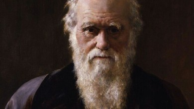 Photo of Engenho do Mato: Charles Darwin, Tiririca e a água escondida