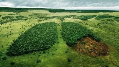 Photo of O pulmão do mundo