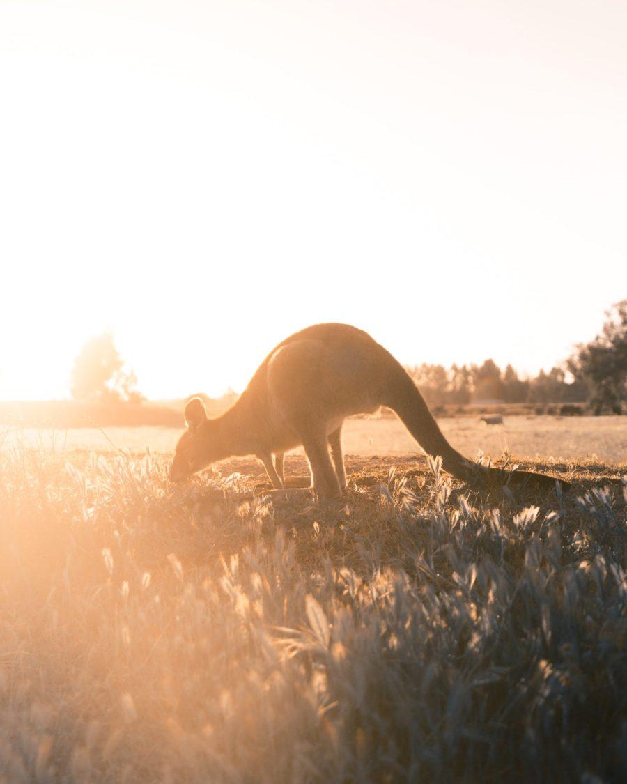 Entreprendre et voyager en Australie