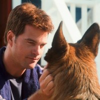 Como Perros y Gatos 2 - Película