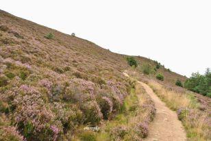 Millestone_Hill_trail_08
