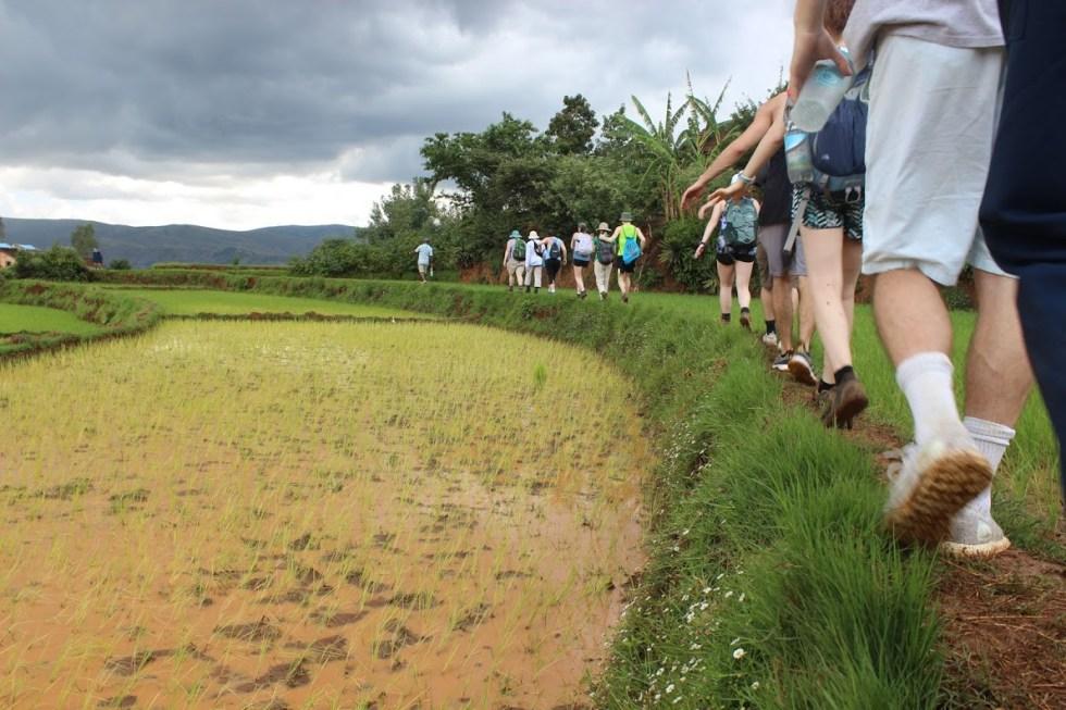Students walking through rice field near Betafo, Madagascar
