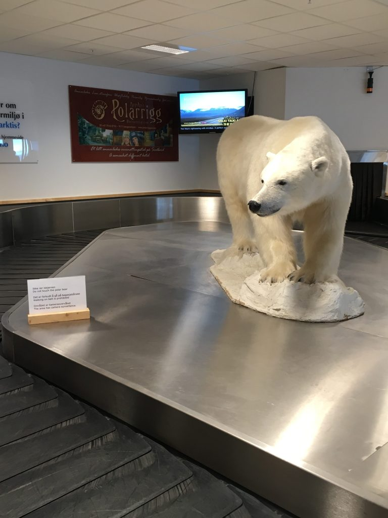 A taxidermied polar bear situated on top of an airport baggage carousel