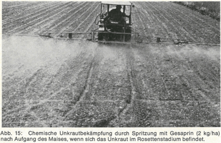 A black-and-white photograph showing a machine driving over a field, spraying atrazine on the crops.