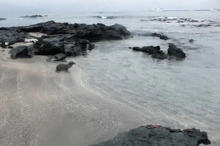 Lugares turisticos de Ecuador Galapagos