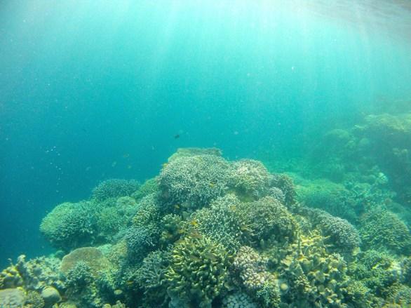 corail-moalboal