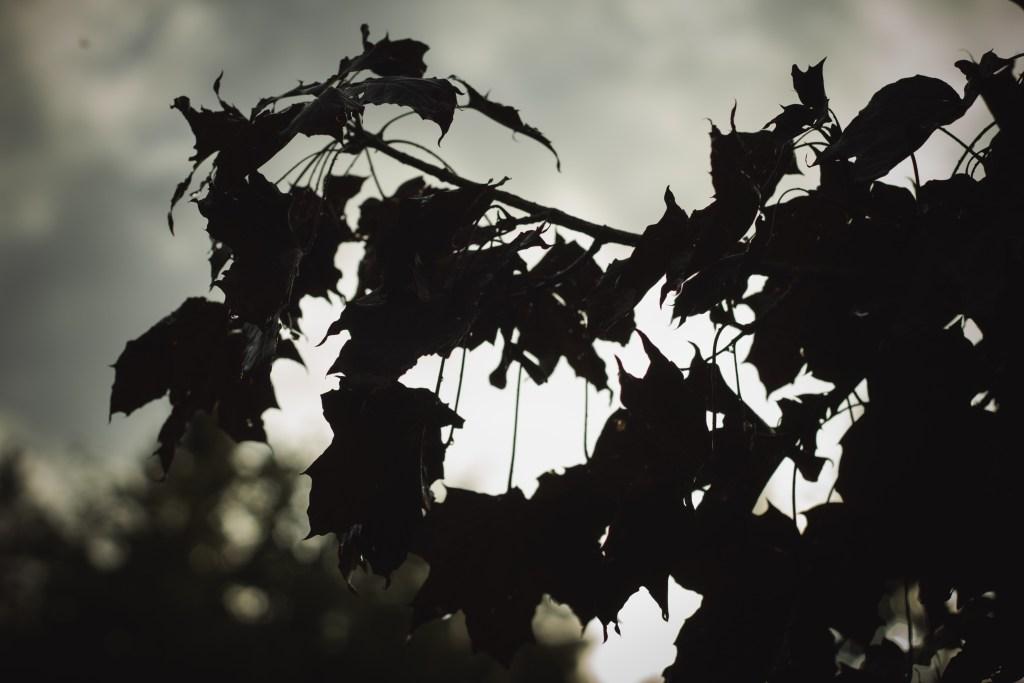 Regntunga löv i motljus.  Foto Johanna Ene.