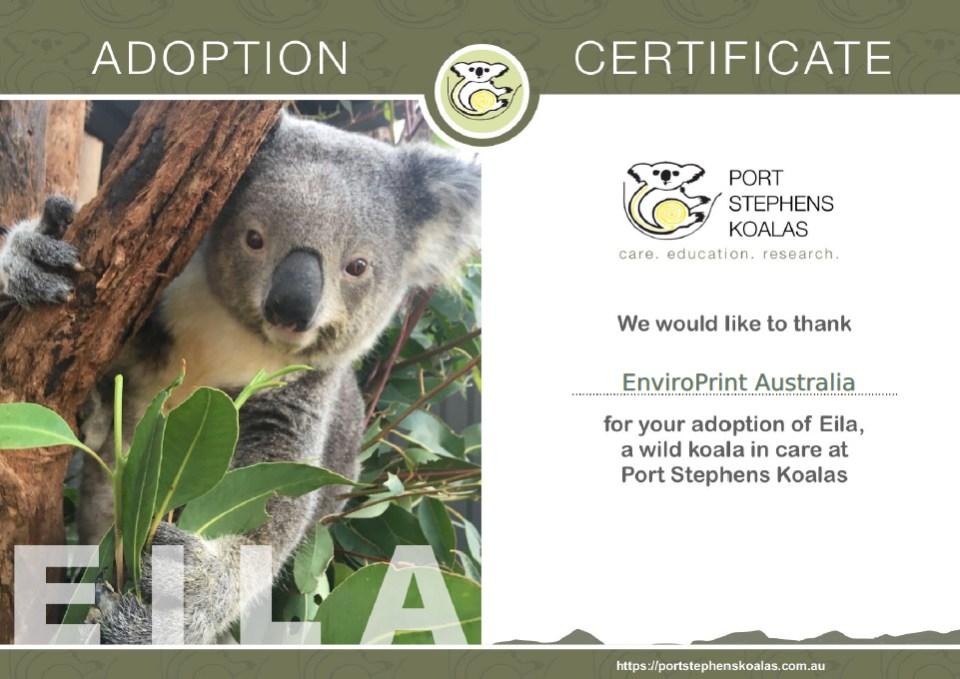 Eila Koala Adoption Certificate
