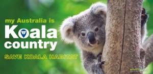 My Australia is Koala Country