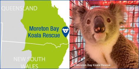 Moreton Bay Koala Rescue