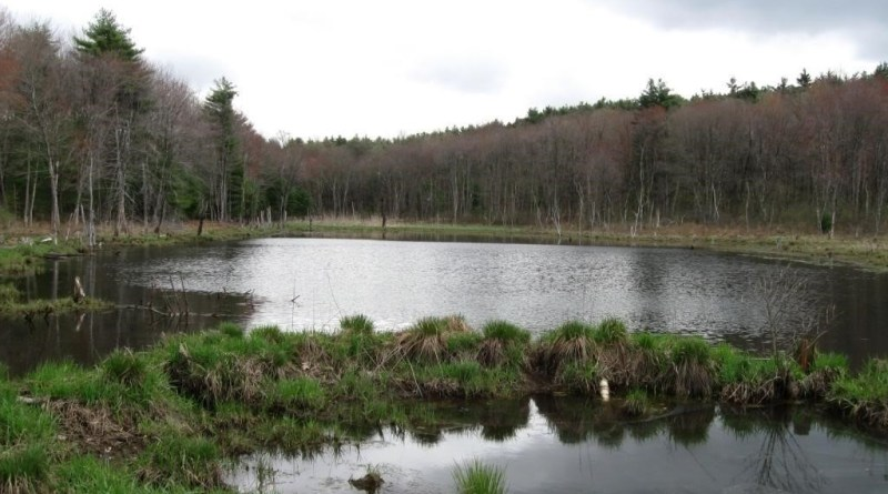 Making Amends with Wetland Soils