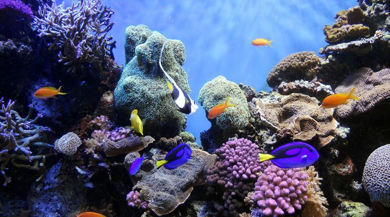 Will Sponges Bulldoze Coral Reefs Faster in an Acidic Ocean?