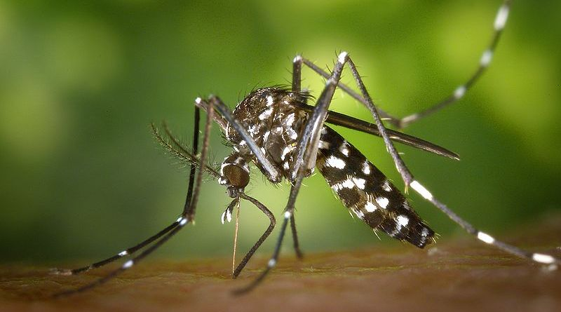 Mosquitoes in Winter (what the..?)