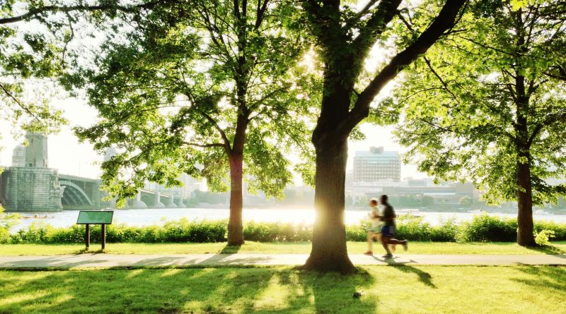 Public Health & Urban Trees – What you need to know