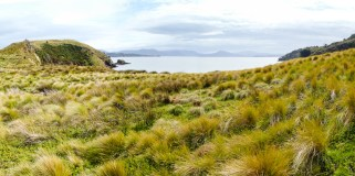 Rakiura National Park, Stuart Island, South Island