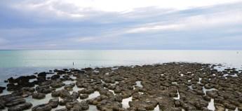 Hamelin Pool Stromatolites, Shark Bay