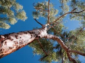 Nawulbinbin Walk, Gregory National Park, Northern Territory