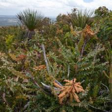 Pristine vegetation of Mt Lindesay, Denmark