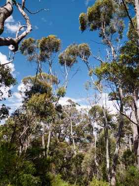 Forest Surrounding Castle Rock, Porongurup National Park