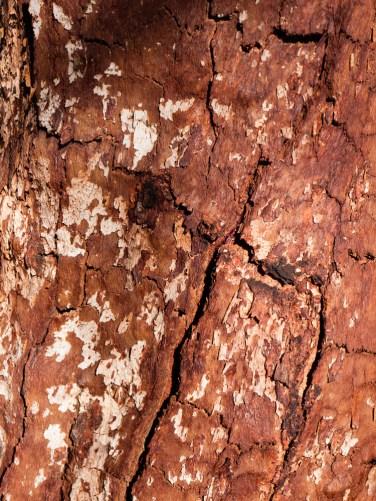 Constance Range, Lawn Hill National Park, Queensland