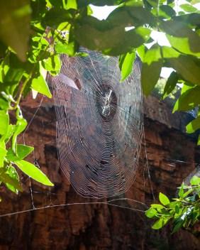 Spider Web in Emma Gorge, El Questro Station, Kimberleys, Western Australia
