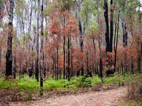 Bush around Nanga Mill Campground, Lane Poole Reserve