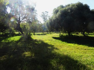 Figure 2: Lush forest and grassland surround the entire reserve.