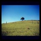 Lone Tree, 2012