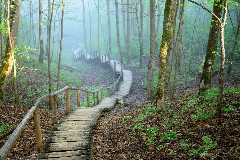 Wooden path through foggy forest of mossy trees