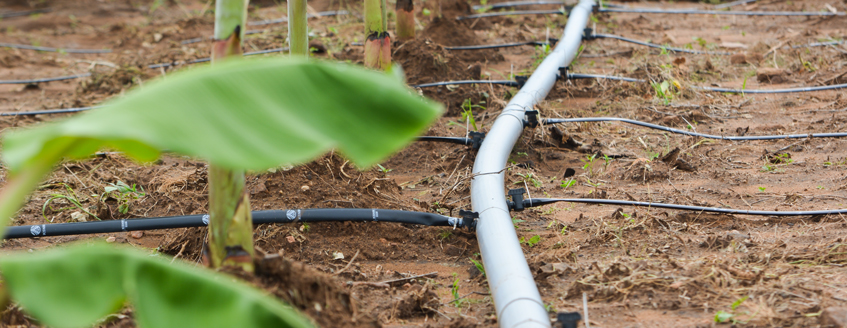 An irrigation system carries water to crops