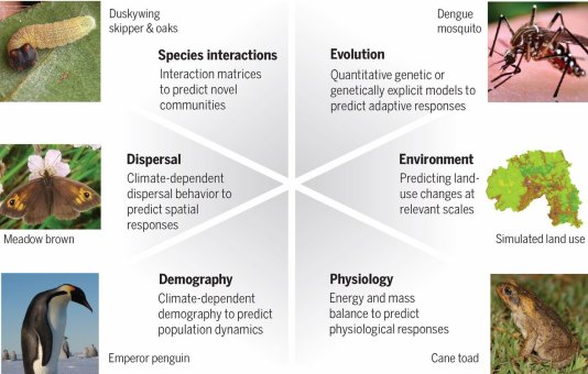 Models that include biological mechanisms have been used to project (clockwise from top) the evolution of disease-harboring mosquitoes, future environments and land use, physiological responses of invasive species such as cane toads, demographic responses of penguins to future climates, climate-dependent dispersal behavior in butterflies, and mismatched interactions between butterflies and their host plants. Image courtesy of the study group.