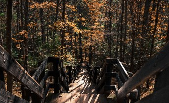 Wood steps lead down a hill into a forest