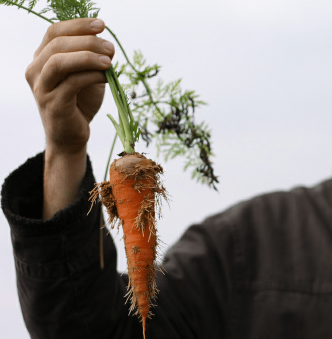 What to Grow in Spring: Vegetables, Fruits, and Herbs