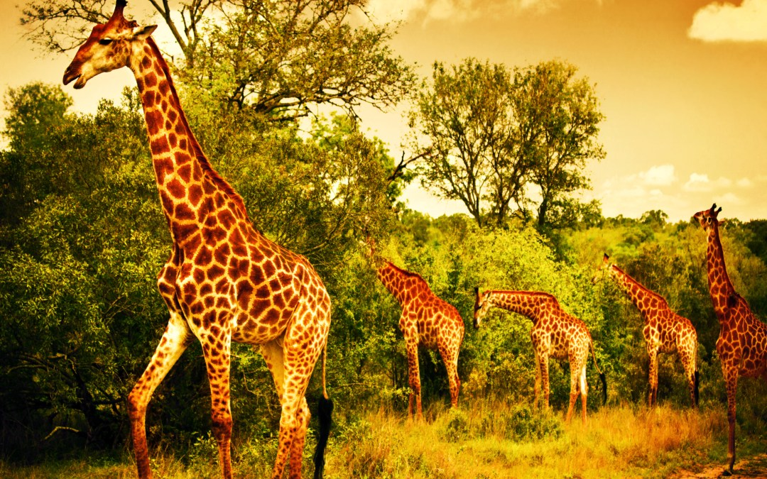 African Wildlife Foundation Fights for a Beautiful Tomorrow