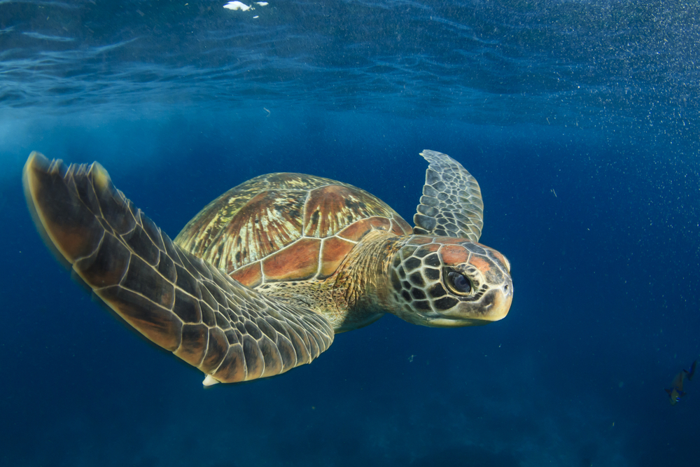 Scientist Accidentally Discovers 'Glowing' Sea Turtle