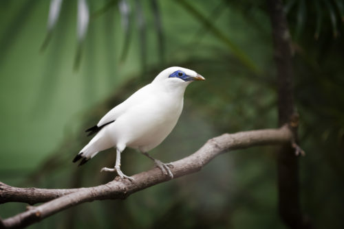 New Report Discusses Methods for Island Species Conservation