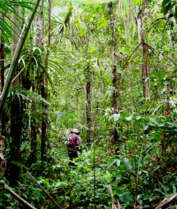 Picture of a fieldworker in dense palm swamp forest