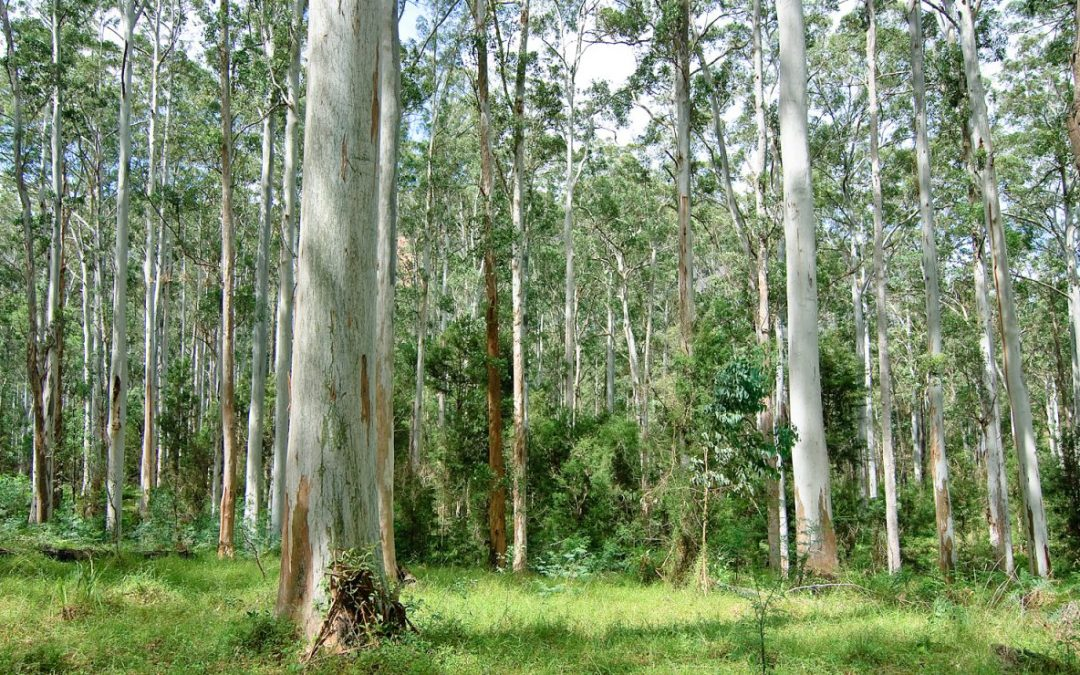 Environmental history and literature courses at WEA Sydney