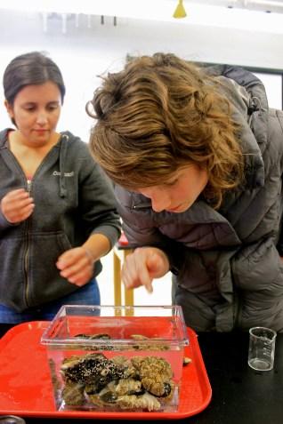 Meagan and Hannah taking a look at the way barnacles eat.