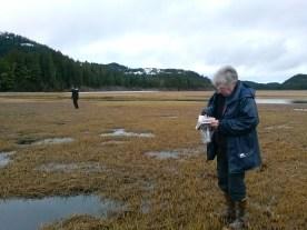 Volunteer looking at Field book