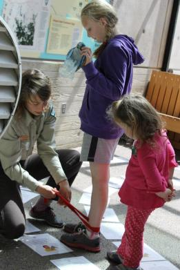 """Banding a """"migrating bird"""" for research during """"The Migration Challenge"""""""