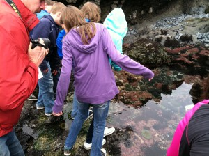 Students in tide pool found an Pacific giant octopus