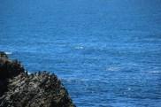 Cormorants nesting on Lion's Head